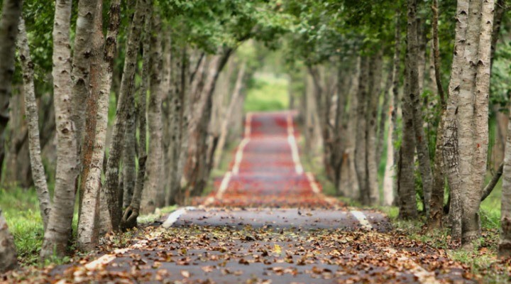 Marketing automation means taking the scenic route for the same results
